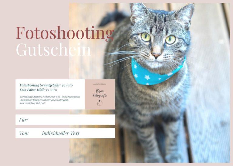 Gutscheinformular mit Katze
